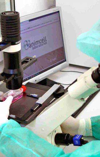 Animcell Laboratórium